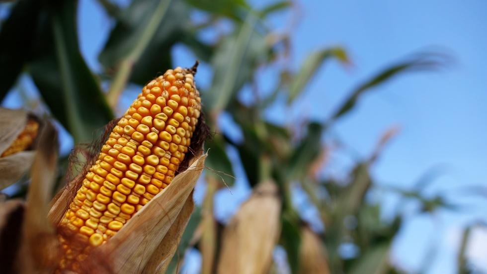 Tough times and tumbling prices test Midwestern farmers image