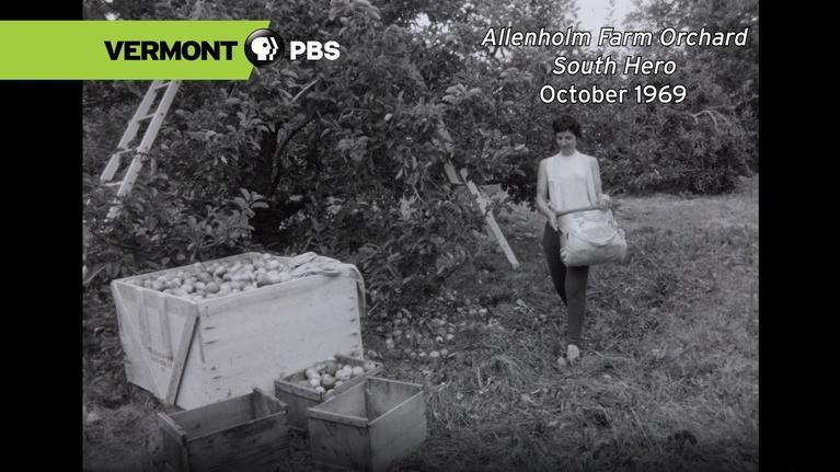 From The Archives: Allenholm Farm Orchard | October 1969
