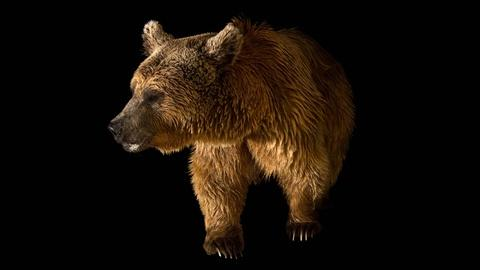 Rare -- Creature Clip: Syrian Brown Bear