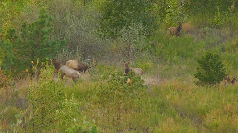 Kentucky Afield: Hunting Predators and Prey, and a Useful Tip for Deer Season