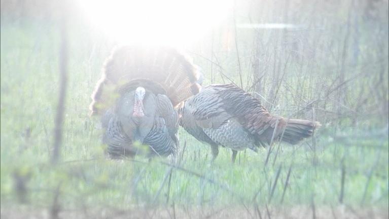 Kentucky Afield: Hunting Dogs; White Bass; Turkey Season