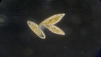 Growing Simple Cells with the Help of... Soap?