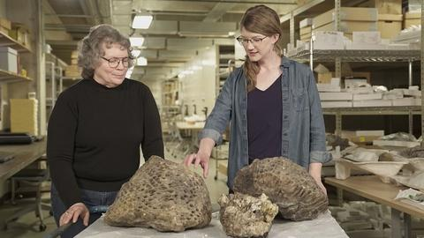 Prehistoric Road Trip -- Episode 3 Preview   Tiny Teeth, Fearsome Beasts