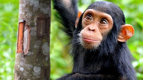 NOVA -- NOVA Wonders What Are Animals Saying?