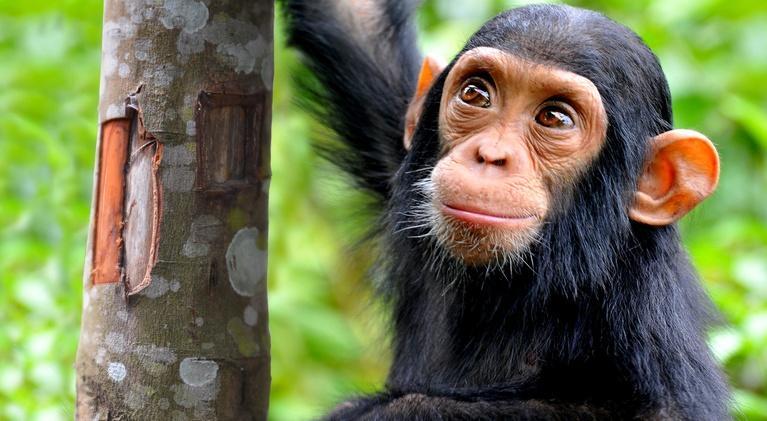 NOVA: NOVA Wonders What Are Animals Saying?
