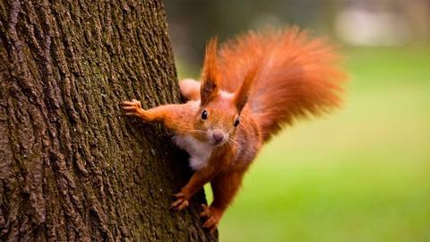 S37 E4: A Squirrel's Guide to Success
