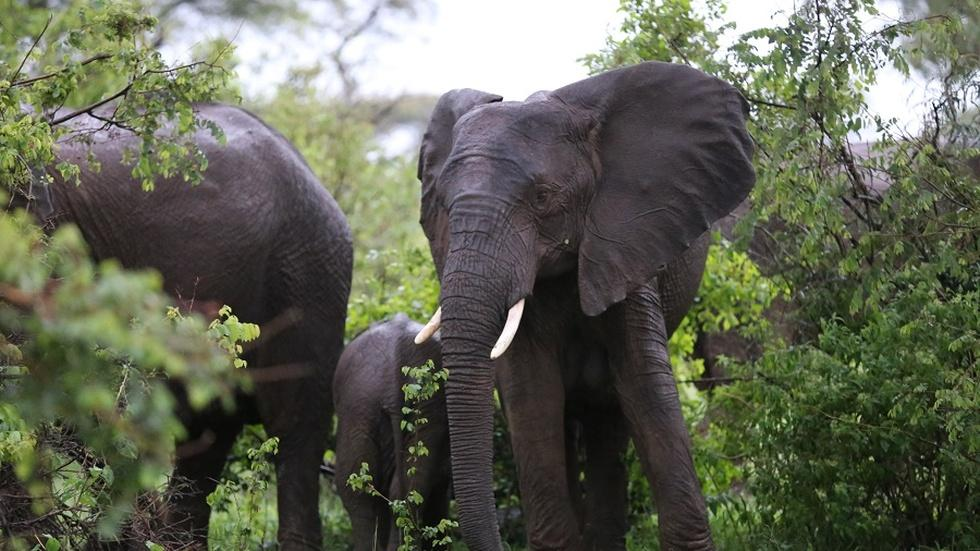 Drones keep elephants away from people in Tanzania image