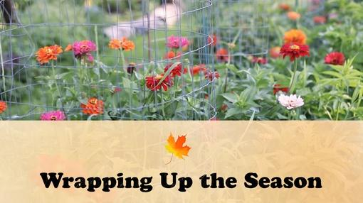 Let's Grow Stuff : Wrapping Up the Season