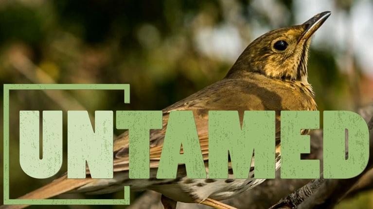 Untamed: Untamed: Songbirds