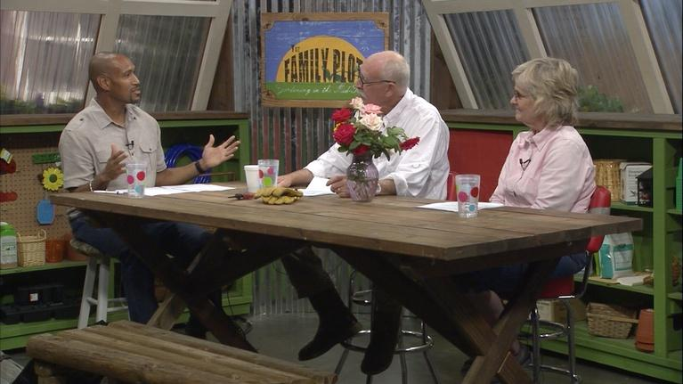 The Family Plot: Growing Roses & Gardening Terms
