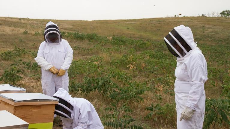 Savor Dakota: Save the Bees
