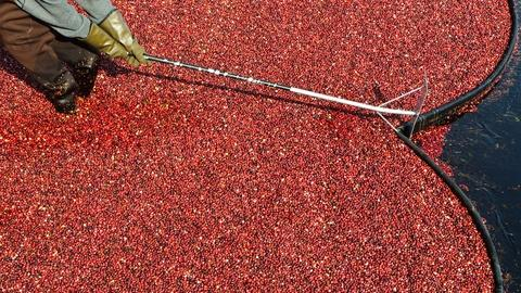 Autumnwatch New England -- A Trip to the Cranberry Bog