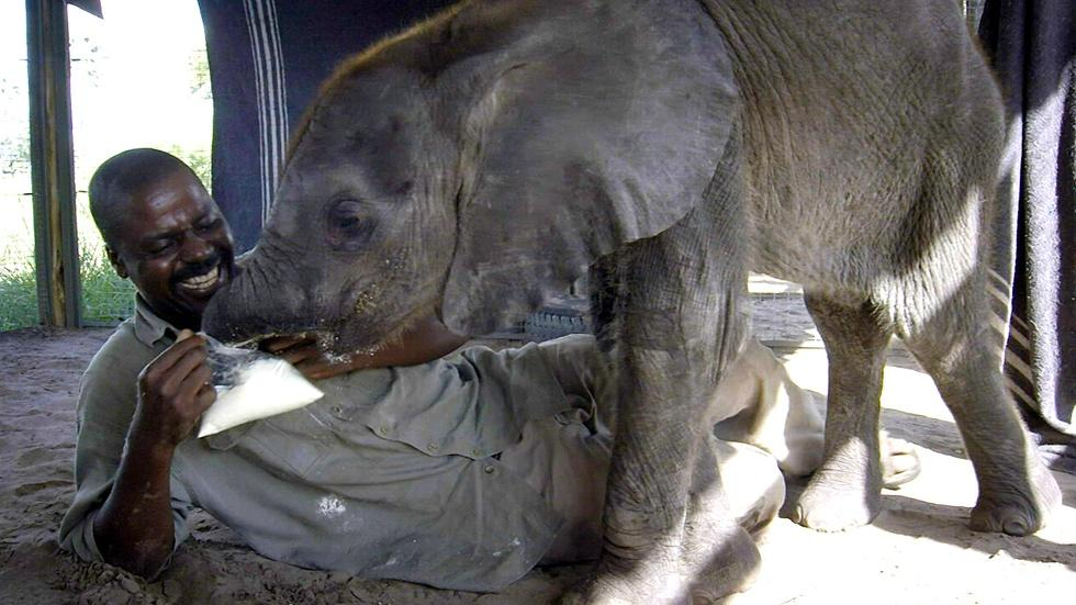 How Not to Feed a Baby Elephant image