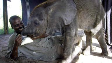 How Not to Feed a Baby Elephant
