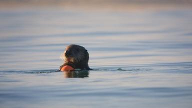 Limpet the Otter Forages on Plastic Waste