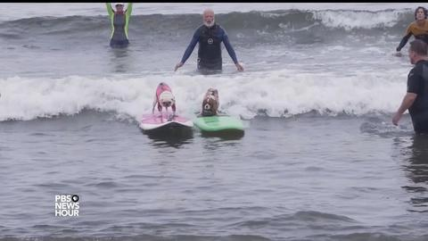 PBS NewsHour -- A surfing contest where everyone doggie paddles
