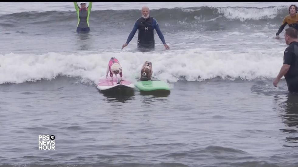A surfing contest where everyone doggie paddles image