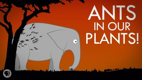 It's Okay to Be Smart -- S4 Ep9: We Got Ants In Our Plants!