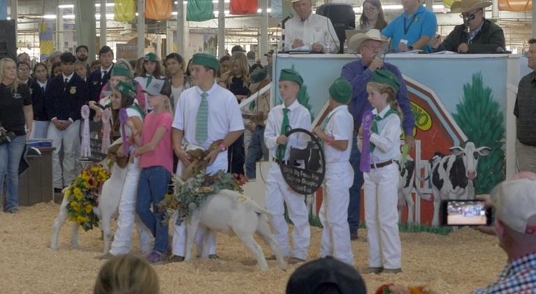 ValleyPBS Specials: Livestock Auction at the Fresno Fair