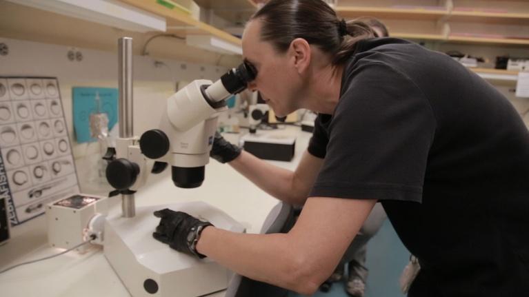 MPT Digital Studios: The Dig: Zebrafish in the Lab