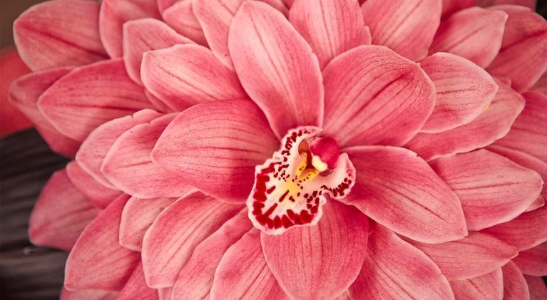J Schwanke's Life In Bloom: Demystifying Orchids
