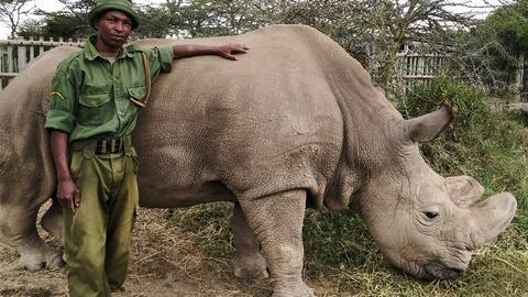 Nature -- The Last Rhino