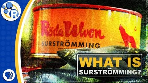 Reactions -- Surströmming: The Secrets of this Stinky Swedish Fish