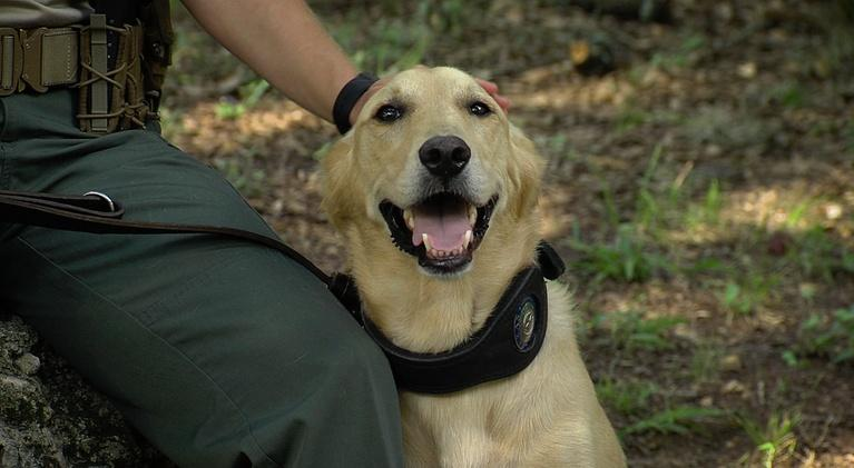 Texas Parks and Wildlife: Canine Wardens, Trailer Camera & Grasslands Sunset
