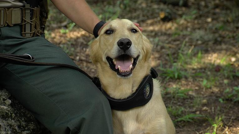 Texas Parks and Wildlife: Canine Wardens, Trailer Camera & Grasslands Sunset