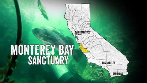 California Coastal Trail -- Monterey Bay Sanctuary: Serengeti of the Sea
