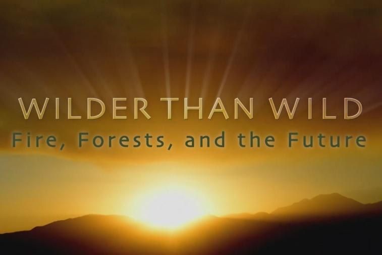 ViewFinder: Wilder Than Wild Thumbnail