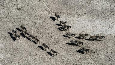 Okavango: River of Dreams - Episode 3: Inferno