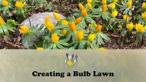 Let's Grow Stuff : Creating a Bulb Lawn