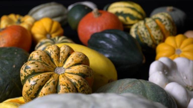 Farm to Fork Wyoming: Maize and Pumpkins