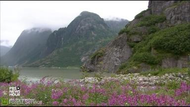 The potential impact of logging in Tongass National Forest