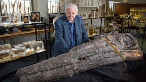 Nature -- Meet a Jurassic Killer: Temnodontosaurus