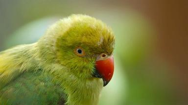 4,000 Parakeets