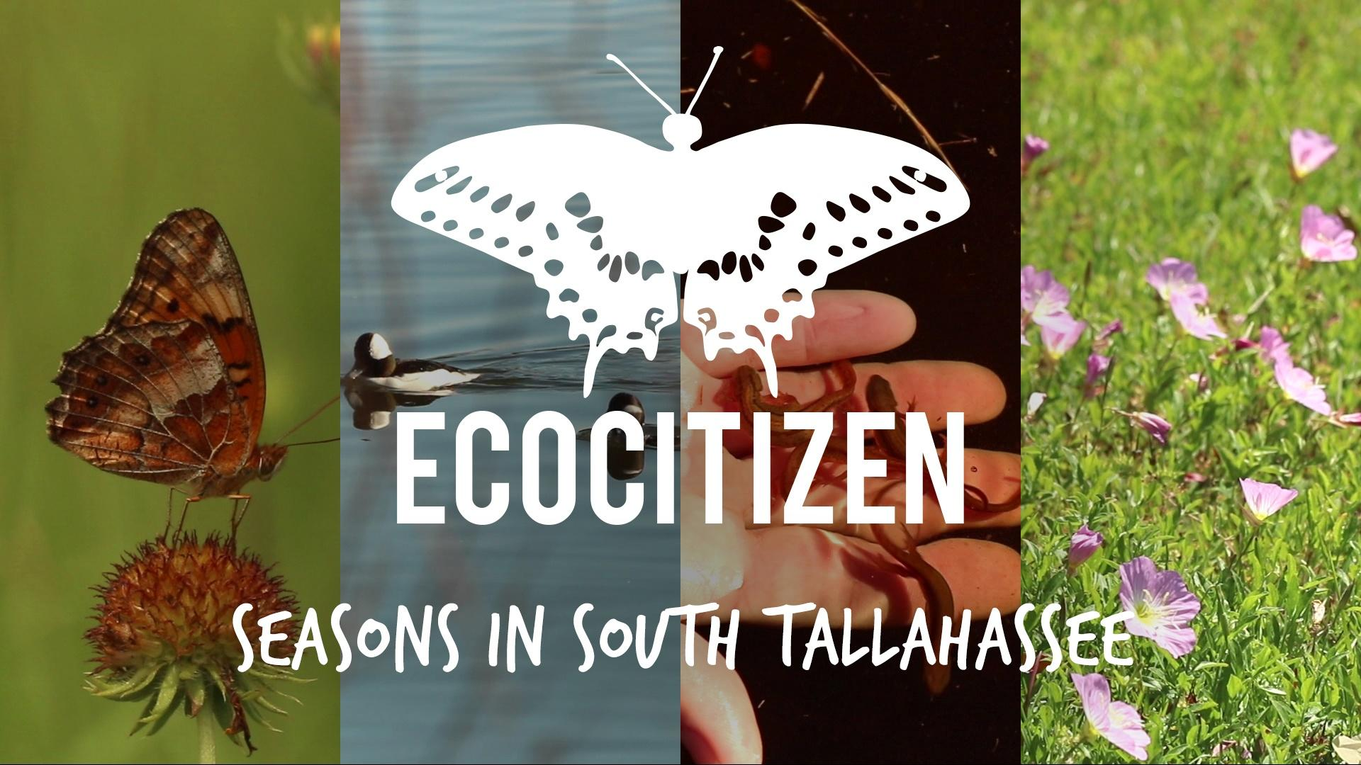 7. EcoCitizen Show | Seasons in South Tallahassee