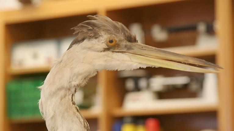 SciTech Now North Carolina: Fit Bits for Herons, Tuberculosis Vaccines and Droplets