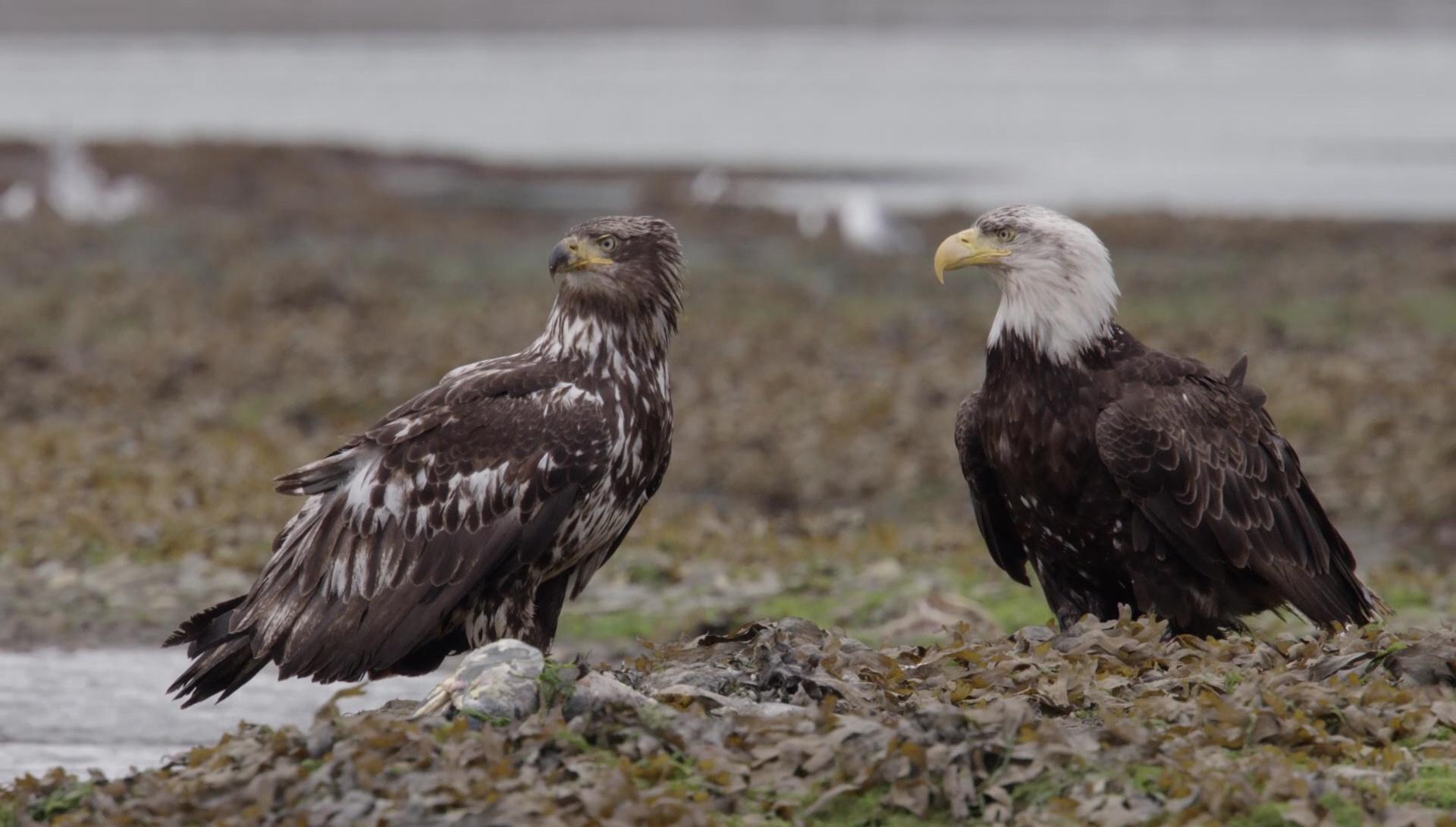 Wild Moments: Eagles