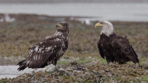 Wild Moments: Eagles