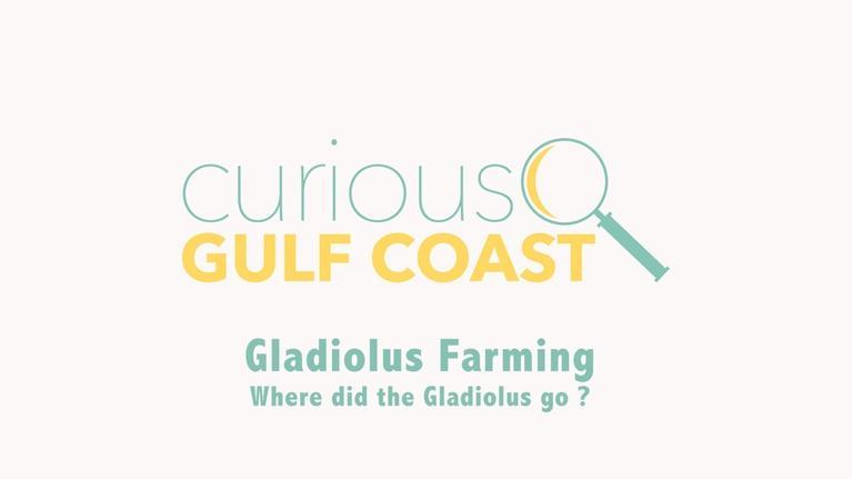 Curious Gulf Coast: Where Did the Gladiolus Go?