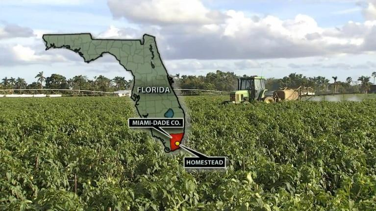 Your South Florida: South Dade Farms in Jeopardy