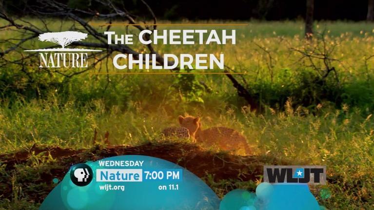 WLJT-DT: NATURE: The Cheetah Children