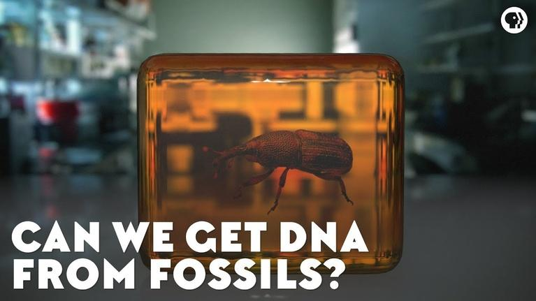 Eons: Can We Get DNA From Fossils?