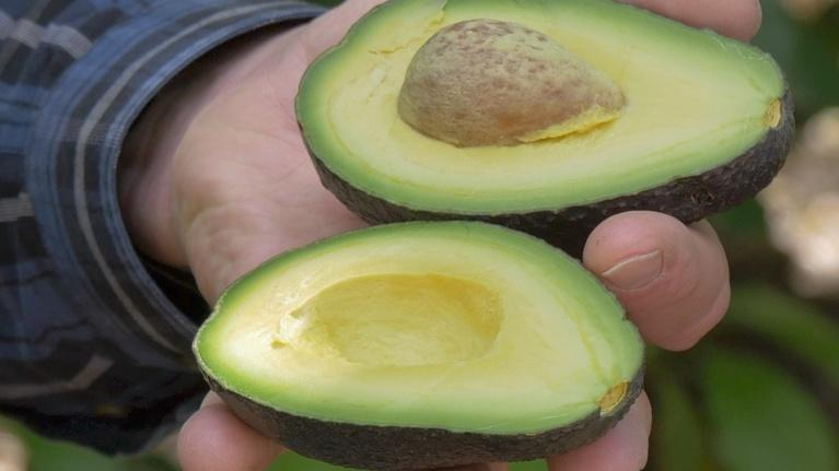 Valley's Gold: 1: Valley's Gold: Avocado