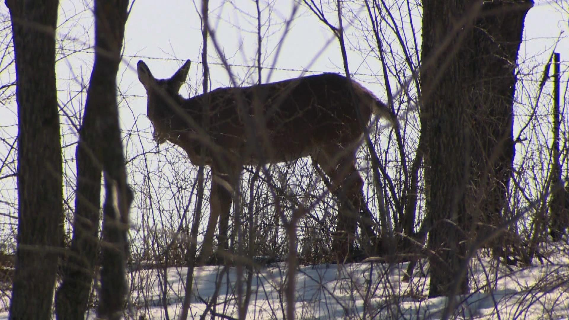 Efforts to Mandate CWD Testing in Parts of Wisconsin