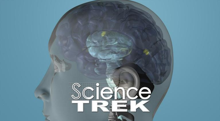 Science Trek: The Brain: What's Inside Your Head