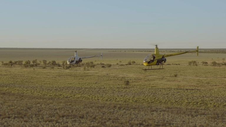 Earth's Natural Wonders: Helicopter Cowboys Wrangle Cattle in Australia