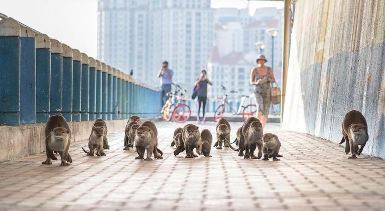 Wild Metropolis: Residents